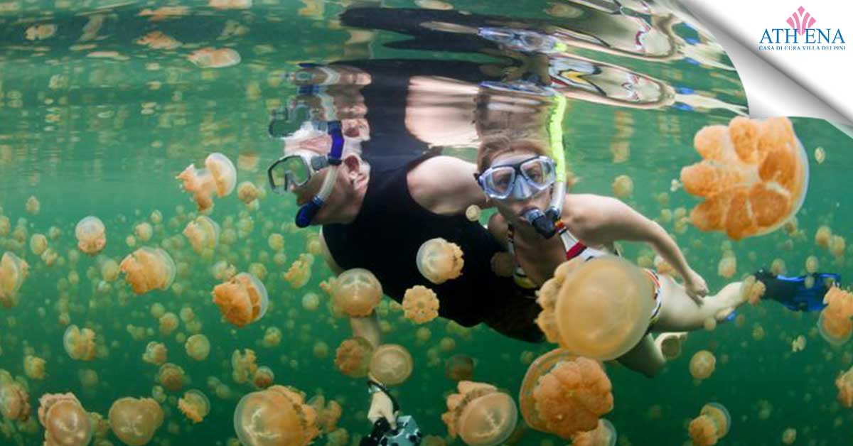 contatto medusa rimedi
